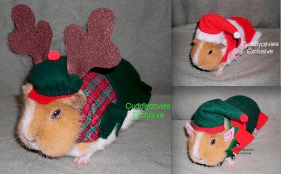festive-guinea