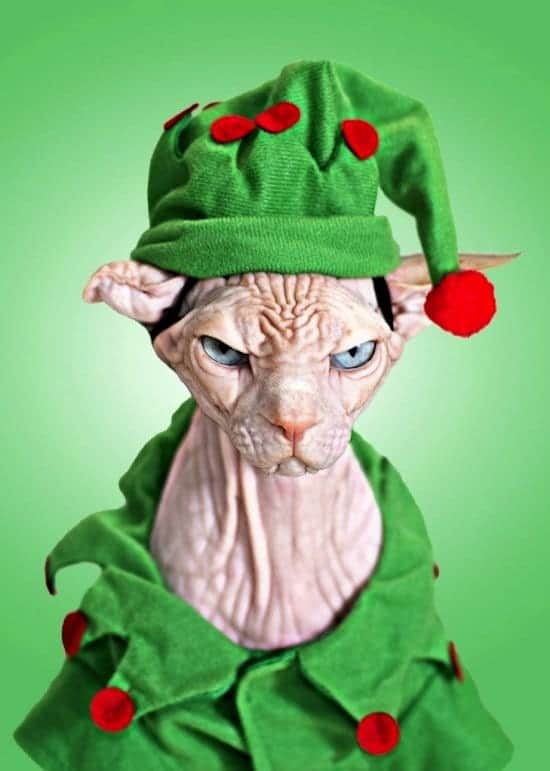 13 Super Cute Animals All Dressed Up For Christmas