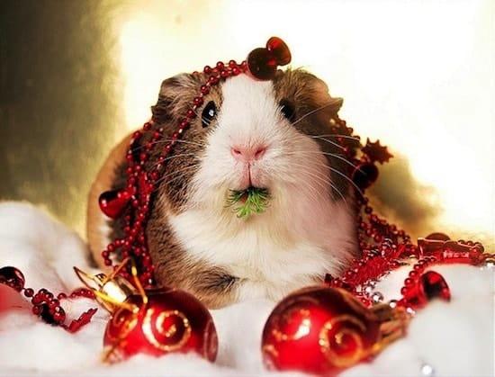 festive-hamster