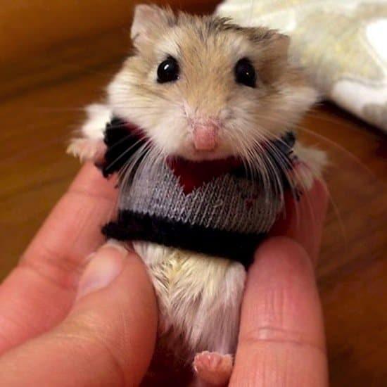 festive-mouse