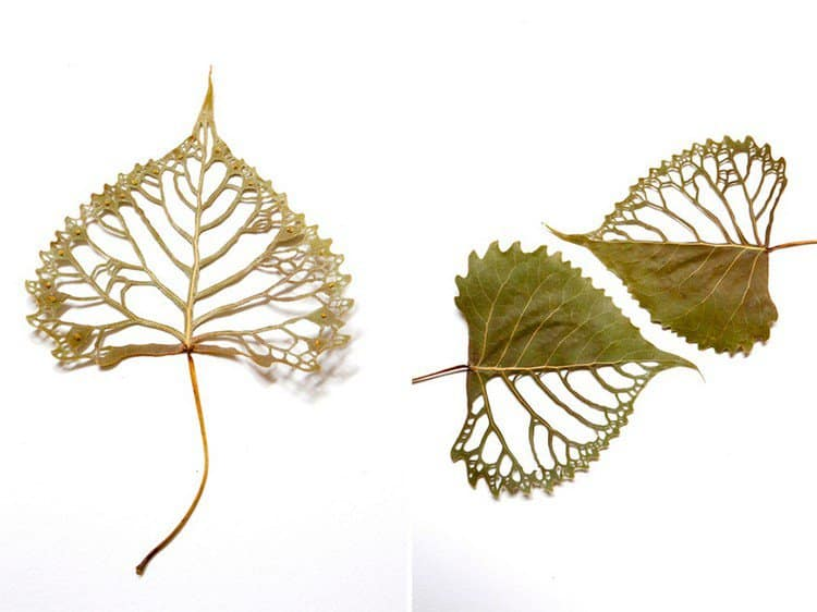 filigree embroidered leaf art