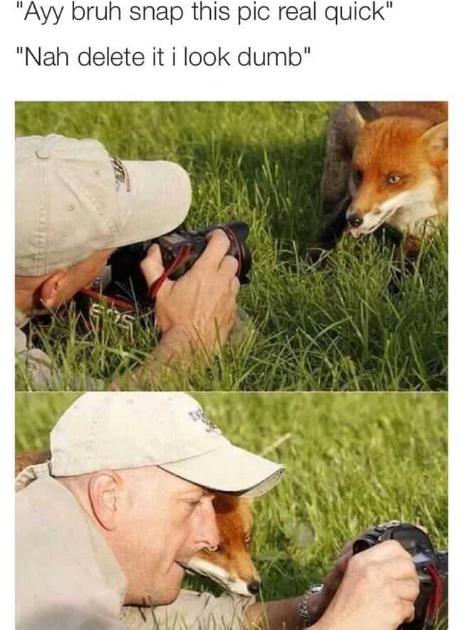 fox taking pic