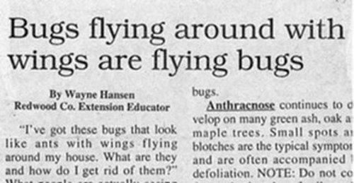 funny-headlines-bugs