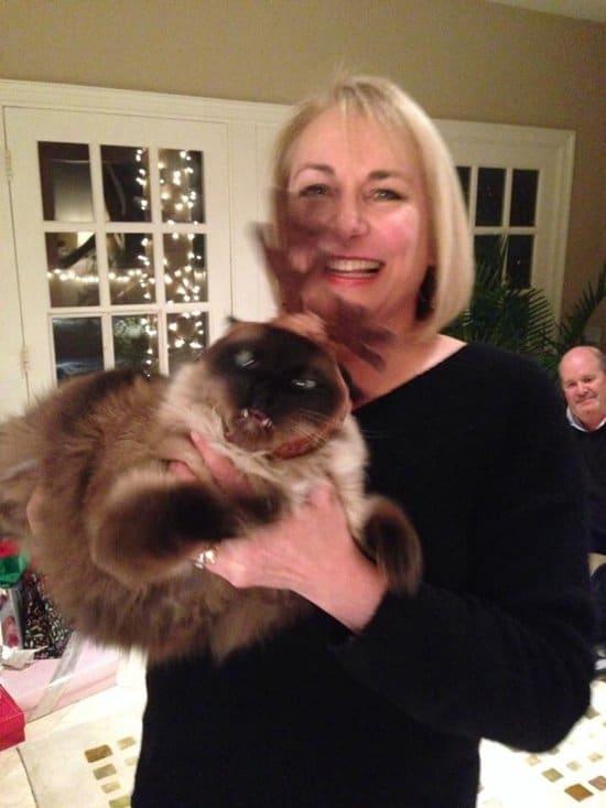 funny-moms-cat