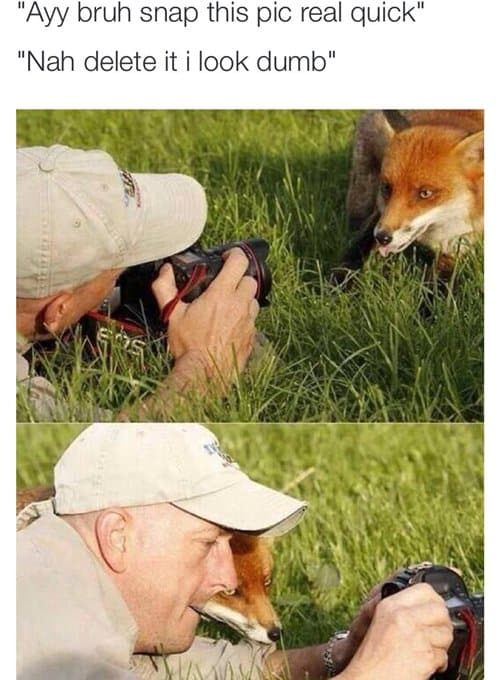 funny-pictures-fox