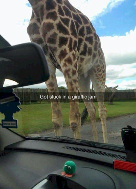 giraffe jam