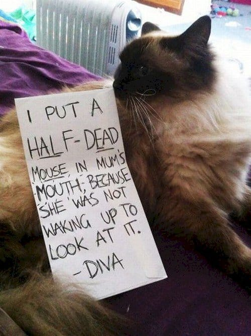 half dead mouse mouth cat