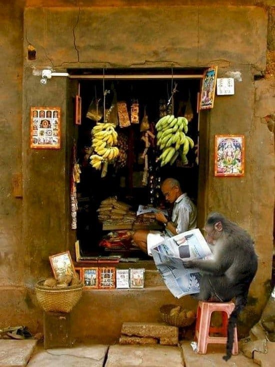 india newspaper reading