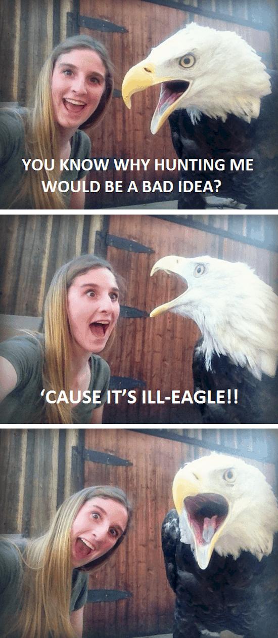 joke-eagle