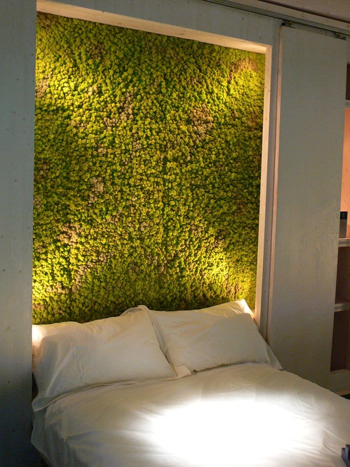 moss-bed