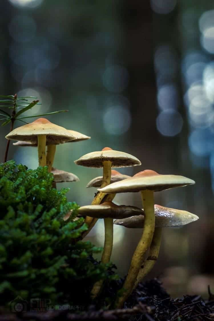 mushroom-alone