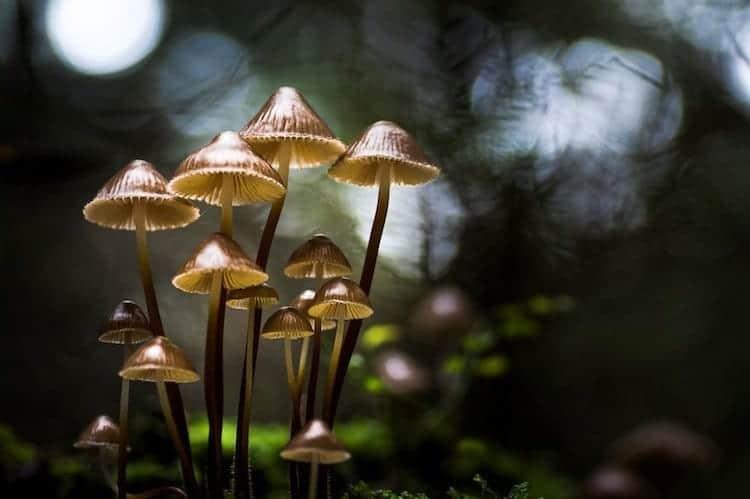mushroom-first