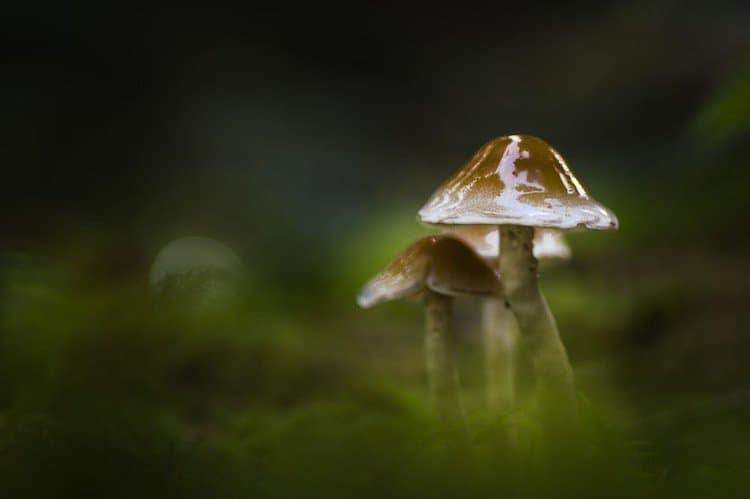 mushroom-shiny