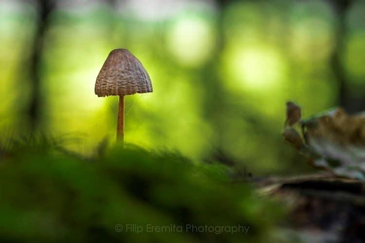 mushroom-shrunk