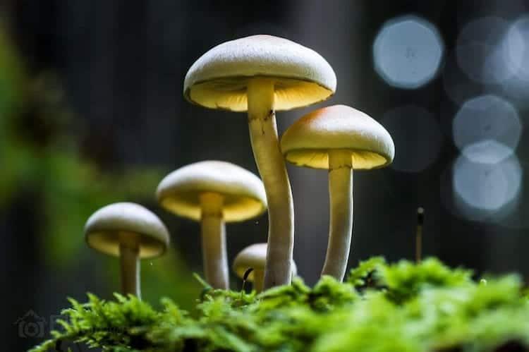 mushroom-straight