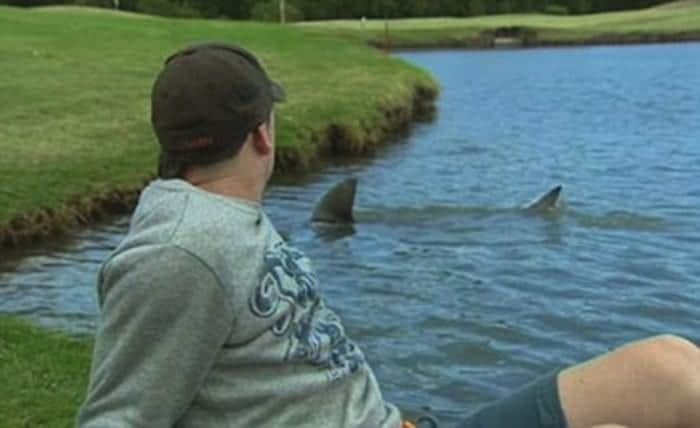 nature-golf-shark