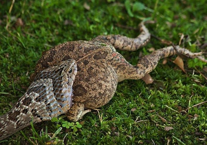 nature-toad