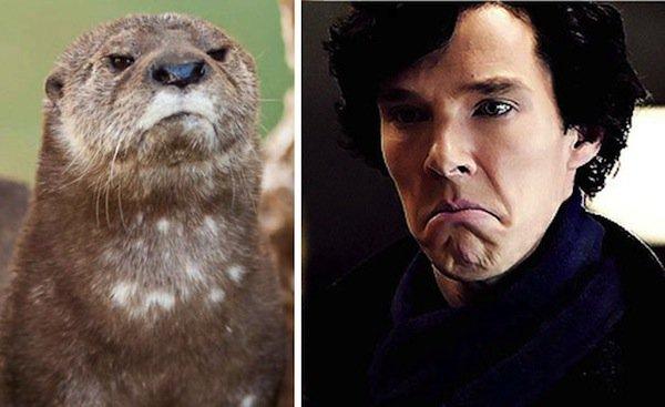 otter-grump