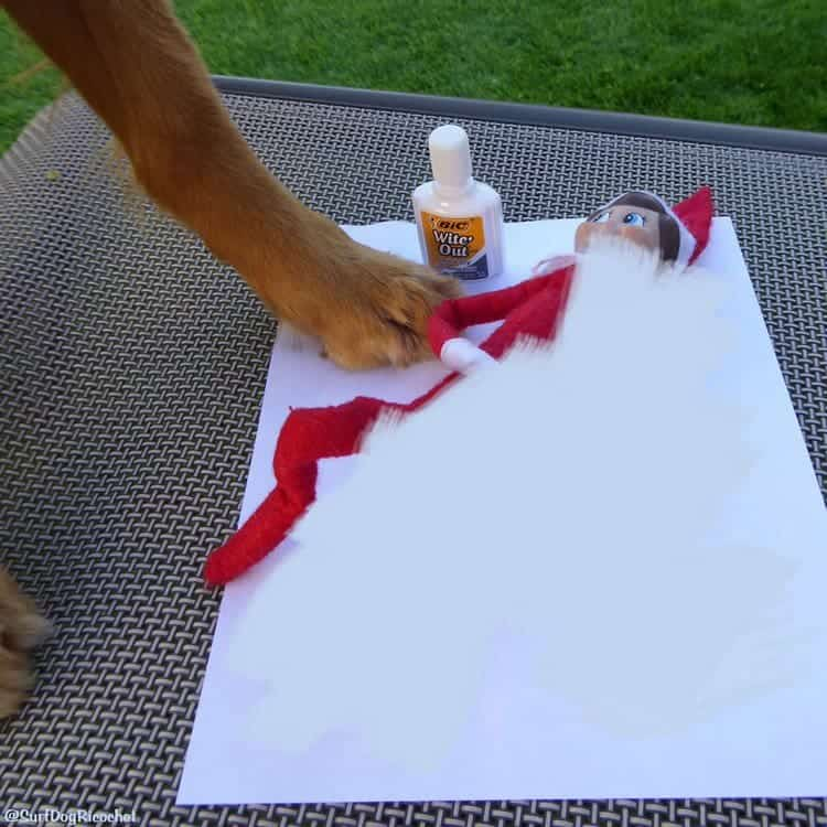 paw white out elf