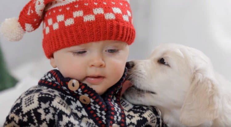 puppy licking baby face