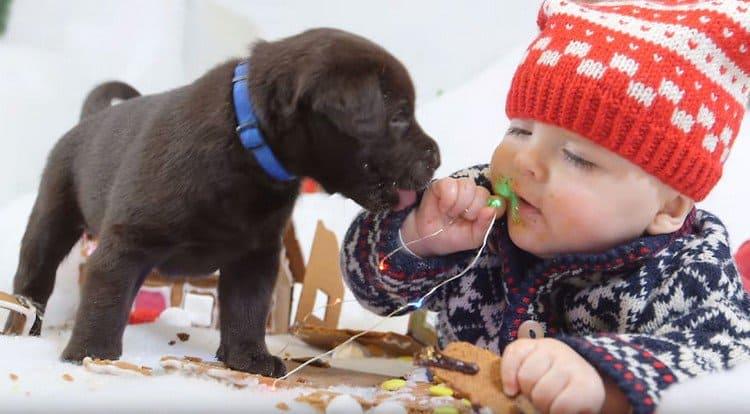 puppy licks baby