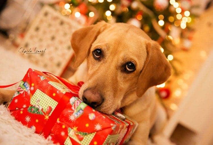 sad dog present