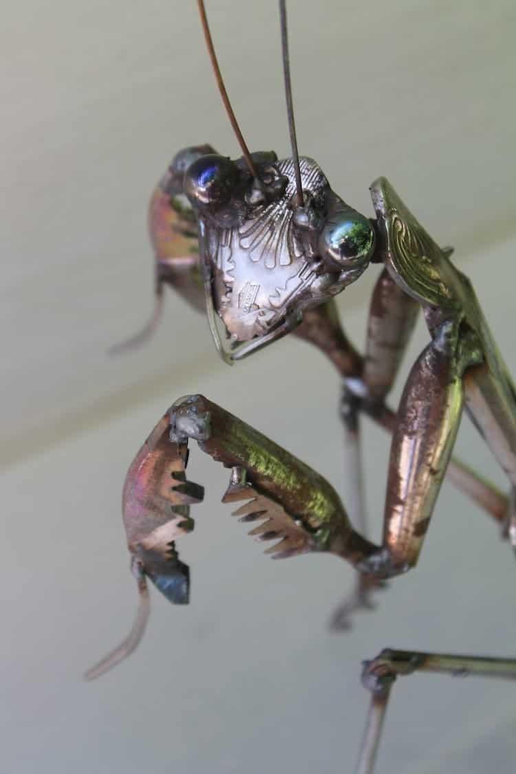 scrap-mantis
