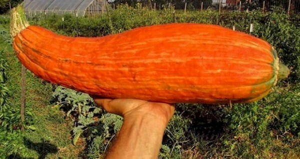 squash in hand