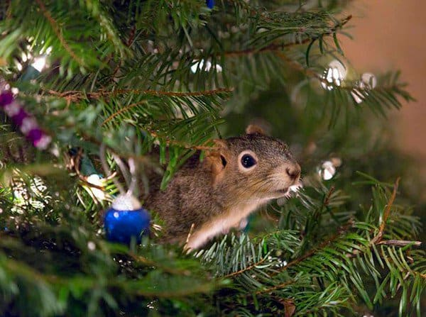 squirrel christmas tree