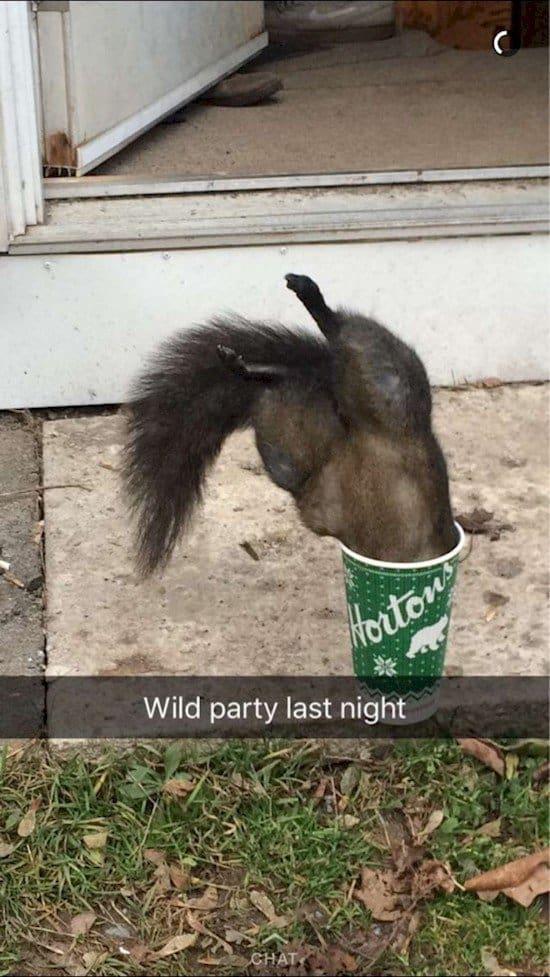 squirrel wild party