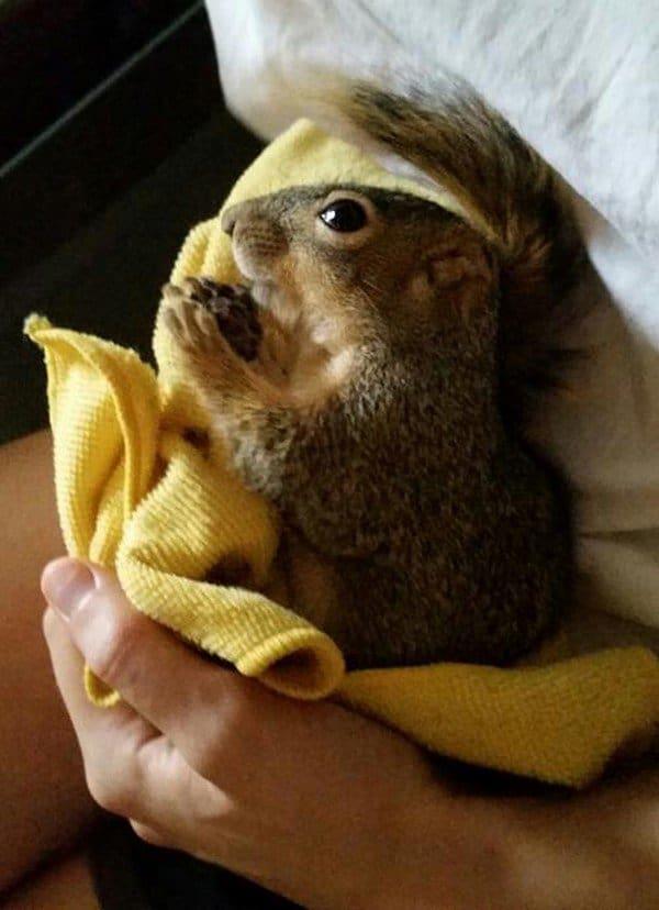 squirrel yellow mat