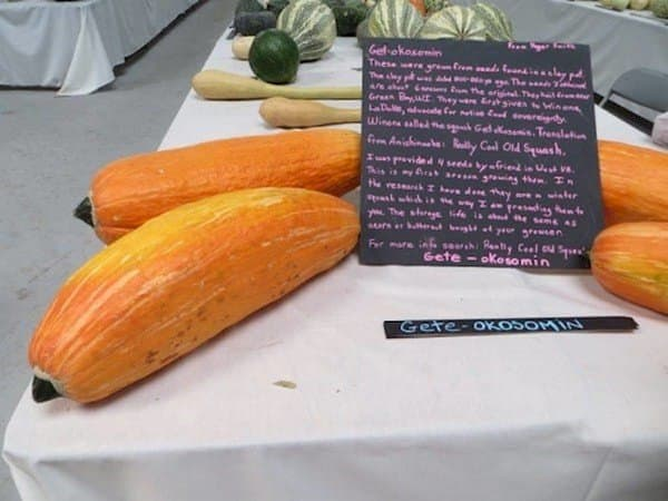 table of squashes