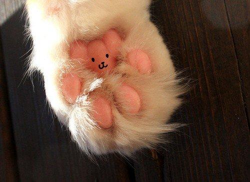 teddy paw