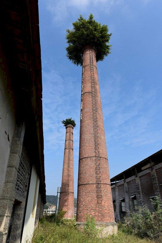 trees sprouting chimneys