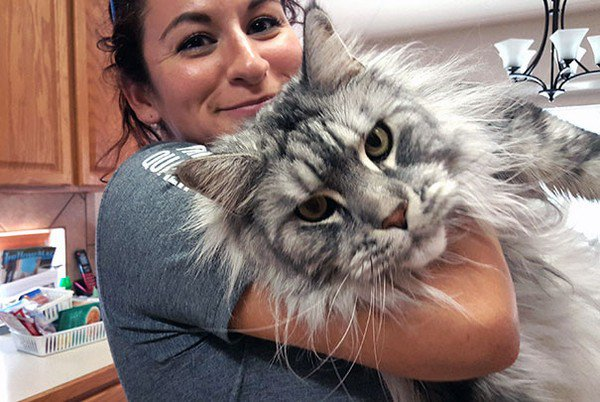 14 Of The Biggest And Most Beautiful Maine Coon Cats Ever