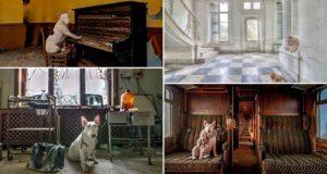 Alice Van Kempen Abandoned Europe Dog