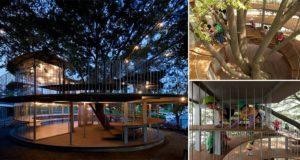 Amazing Fuji Kindergarten Japan Tree