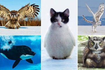 Animal Hybrids