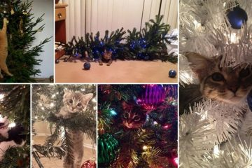 Cats 'Helping' Decorate Christmas Tree