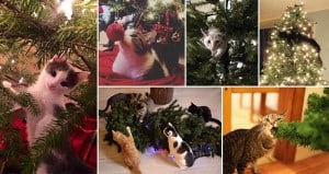 Cats 'Helping' Decorate Christmas Trees