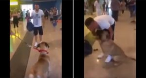 Dog's Joy Seeing His Owner After Three Years