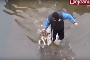 Drowning Dog Reacts Rescued