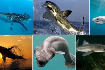 Facts Prove Sharks Awesome Creatures