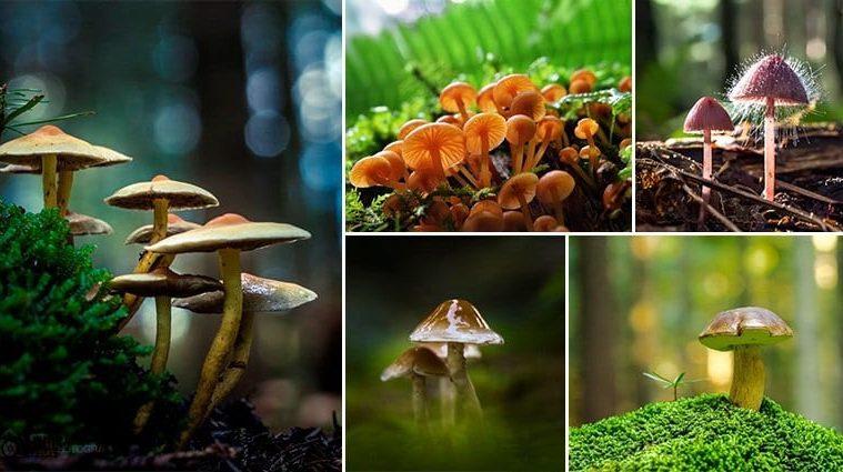 Filip Eremita Mushrooms Photography
