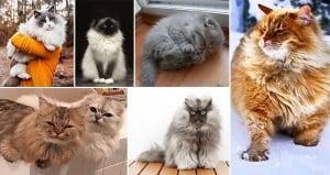 Fluffiest Cat Ever Seen