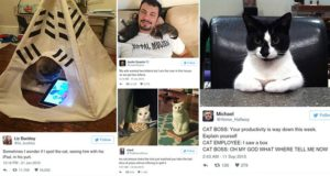 Funniest Tweets Posted About Cats