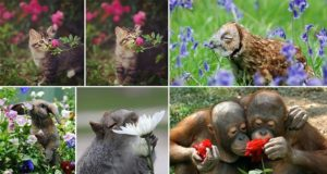 Images Animals Sniffing Flowers