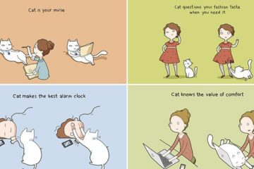 Lingvistov Benefits Of Having A Cat