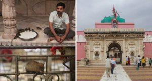 Nicolas Economou Indian Temple 'Holy' Rats
