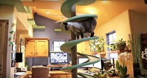 Normal House Feline-Related Secret